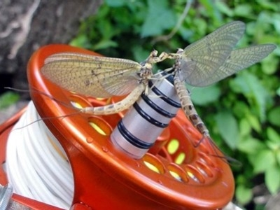 Fly fishing with the may fly - heed these tips!